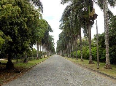 Recife01